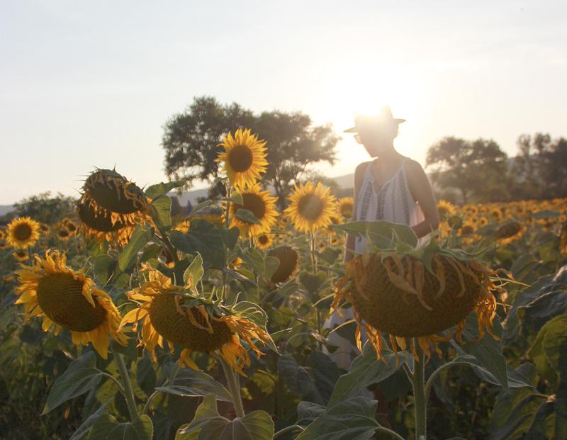 sunflowers-janatini-jana-tomas-5