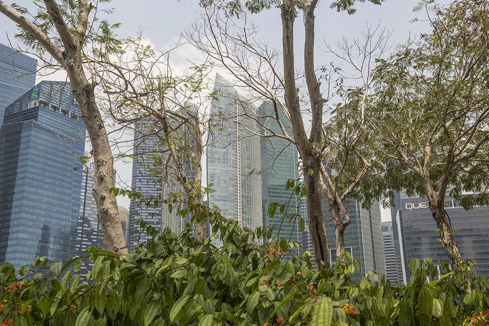 singapore-snapshots-janatini-9